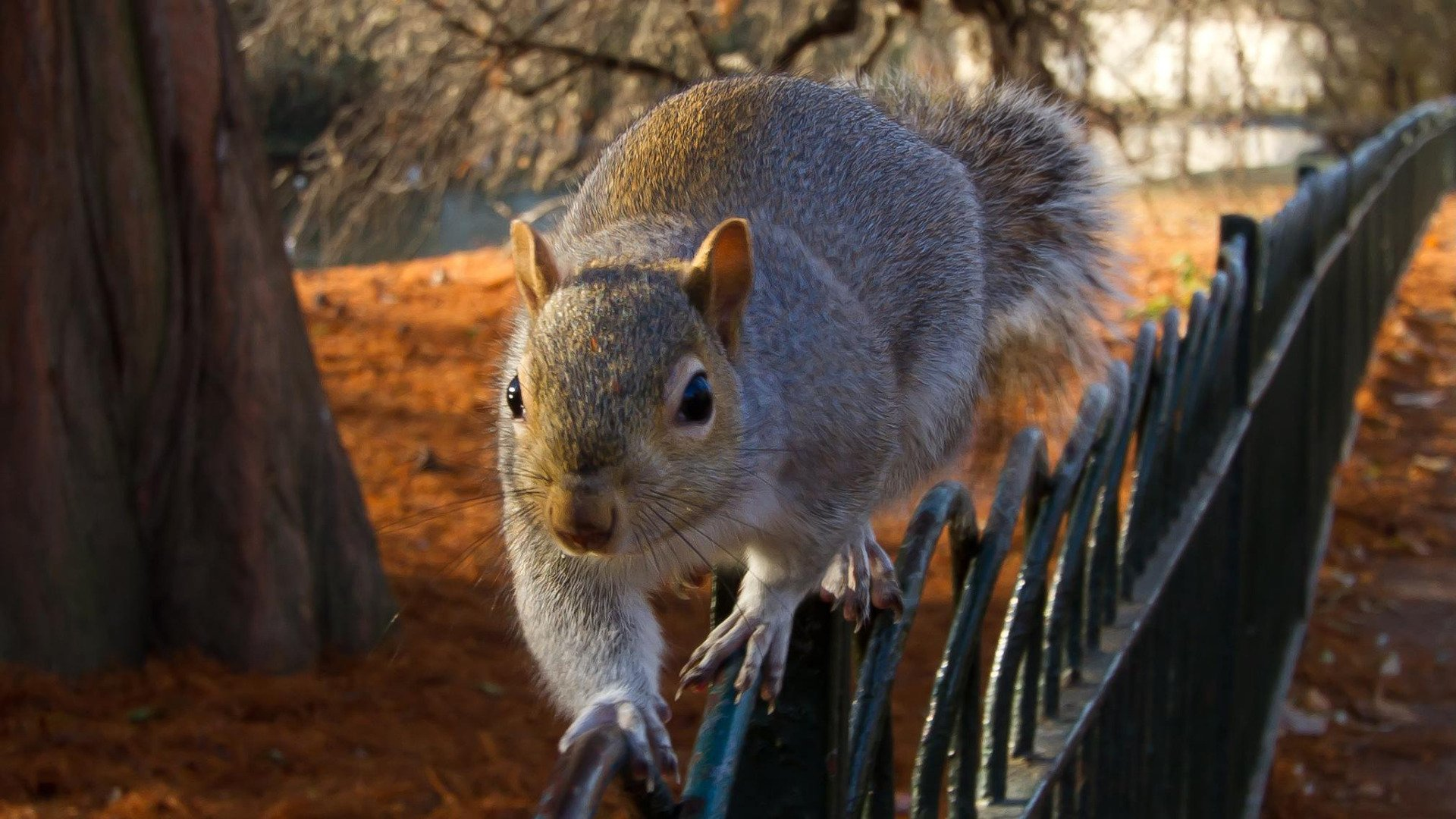 39 funny squirrel wallpaper on wallpapersafari - Funny squirrel backgrounds ...