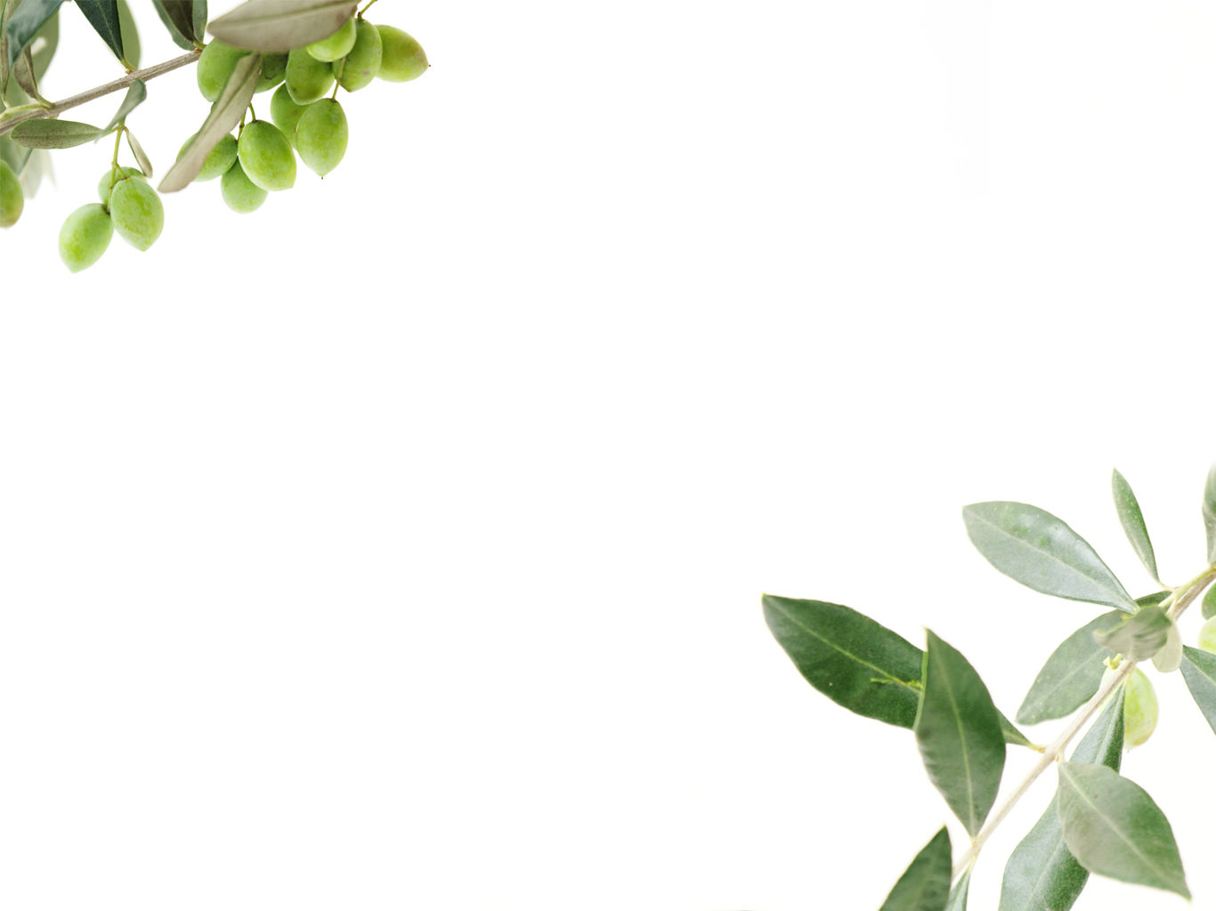Olive Oil Wallpaper 1366x1024