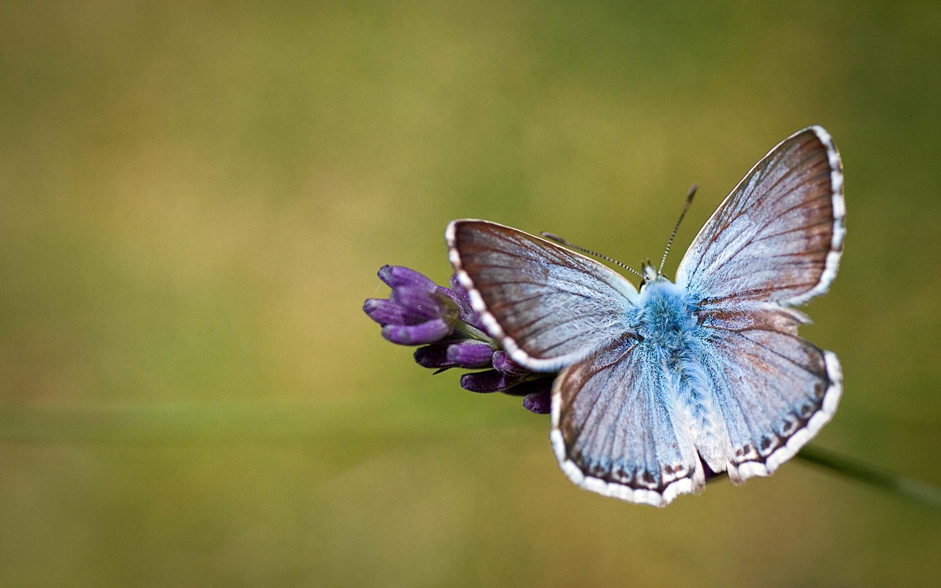 Beautiful Butterfly HD Wallpapers 1920x1200