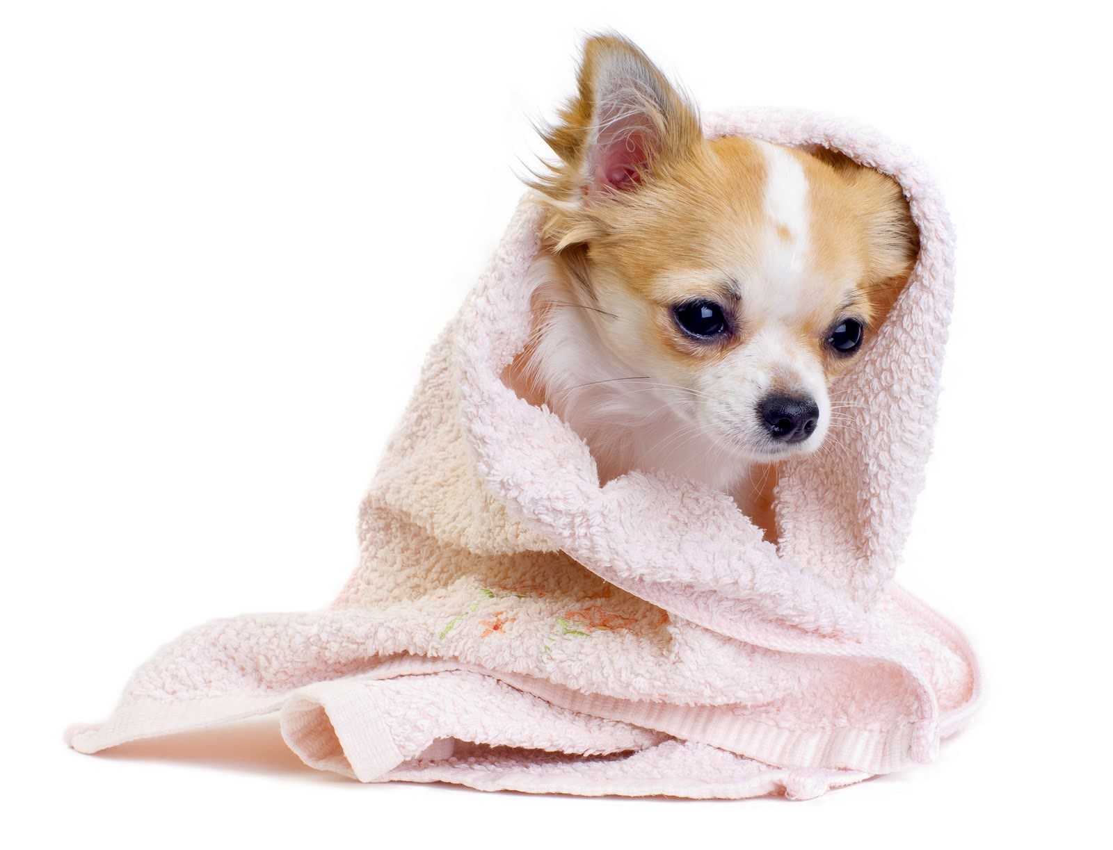 Cute Dog Wallpaper or download picture of Beauty Cute Dog Wallpaper on 1600x1223