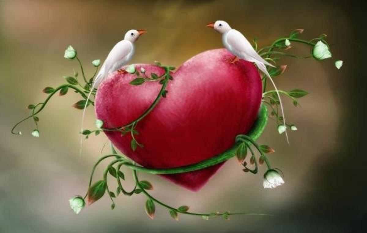 Love Birds Beautiful Bird Dove Doves Flower Flowers