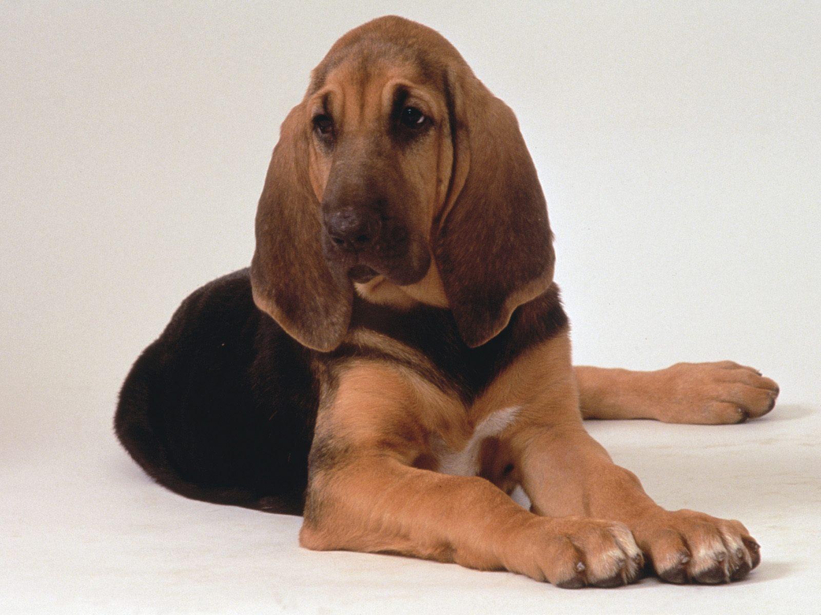 Best 51 Hound Background on HipWallpaper Hellhound Wallpaper 1600x1200