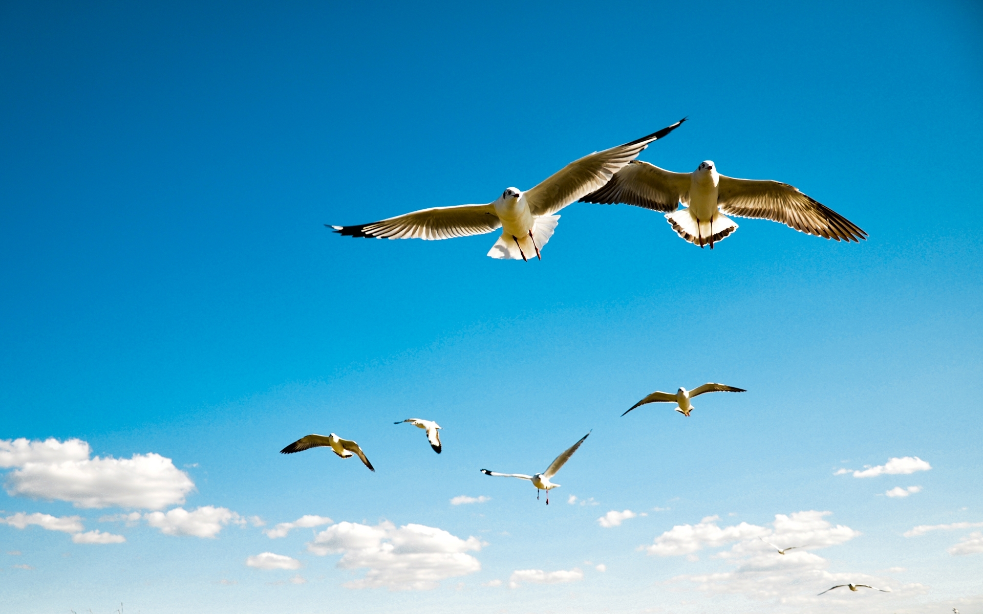 Download Flying Birds In Sky Wallpaper Full HD Wallpapers 1920x1200