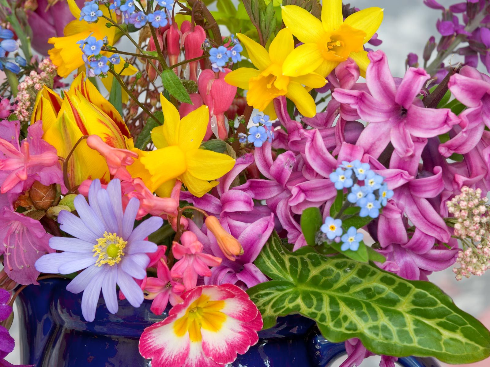 Wallpapers   mmw blog Spring Flowers Wallpaper Spring Flower 1600x1200