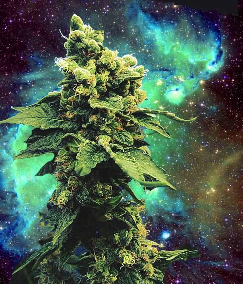 Free Download Weedinspace Tagged Weed Weed In Space Space Weed