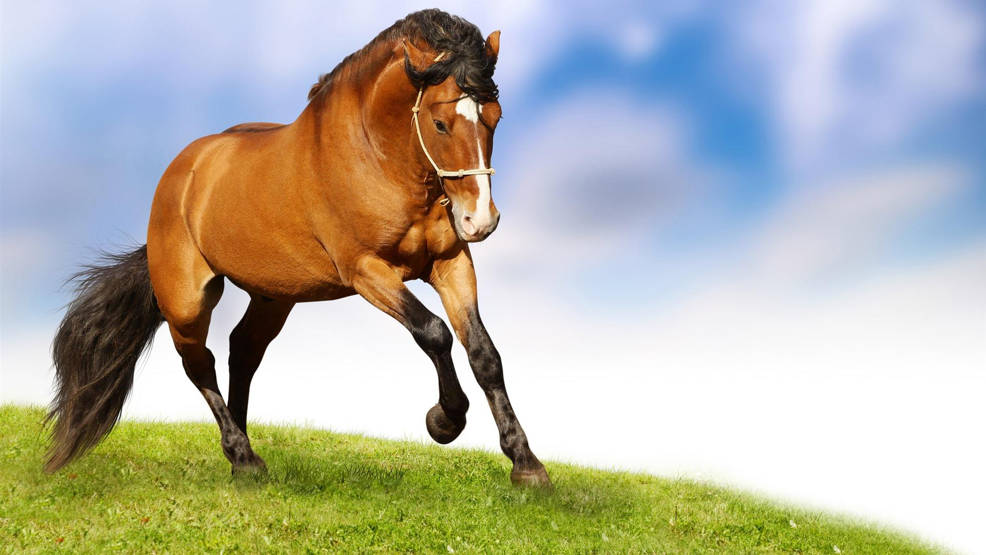 48 Running Horses Wallpaper On Wallpapersafari