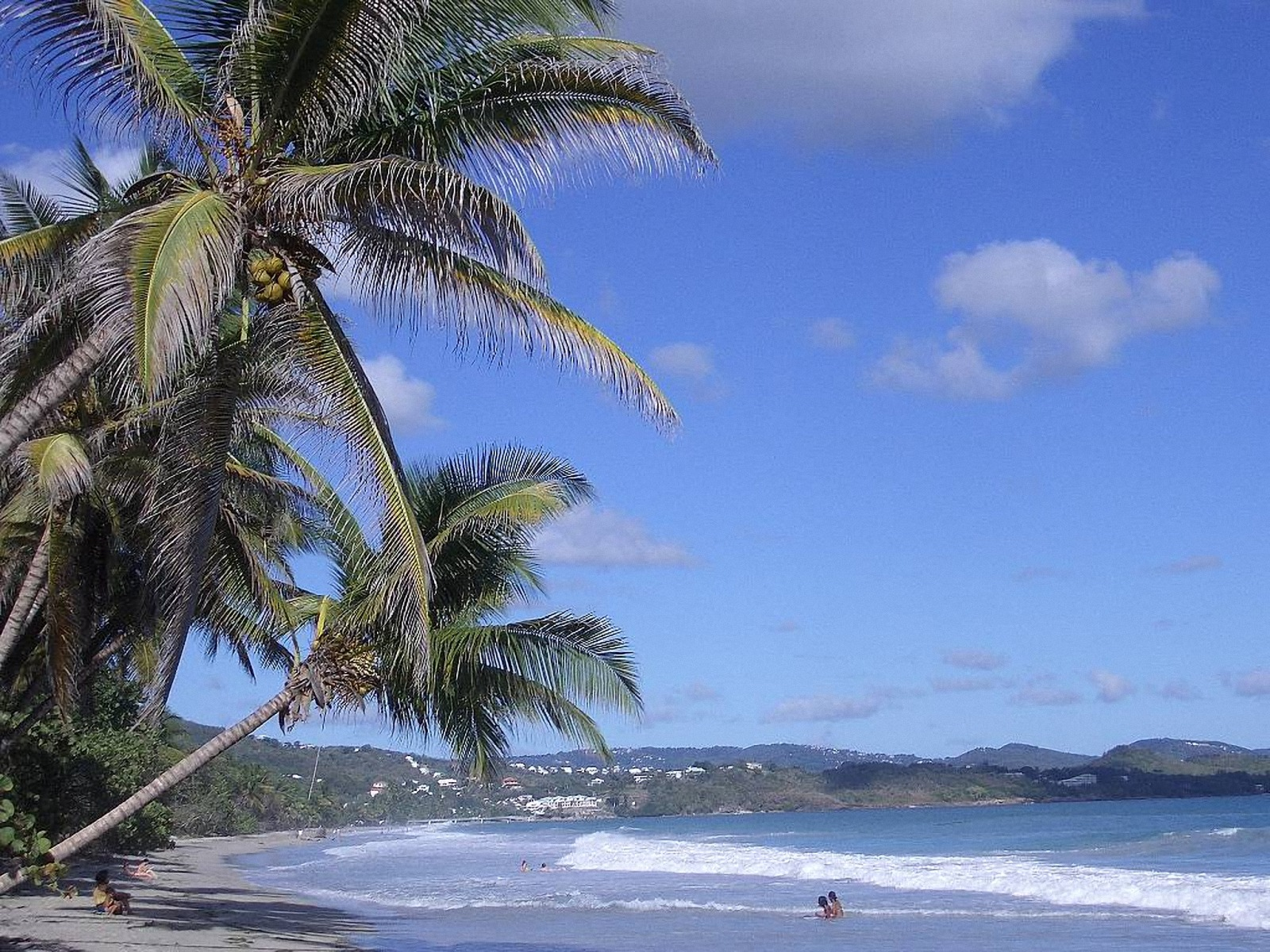 Martinique Coco Palm WallpapersMartinique Wallpapers Pictures 1600x1200