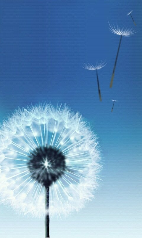 Dandelion Blowing 480x800