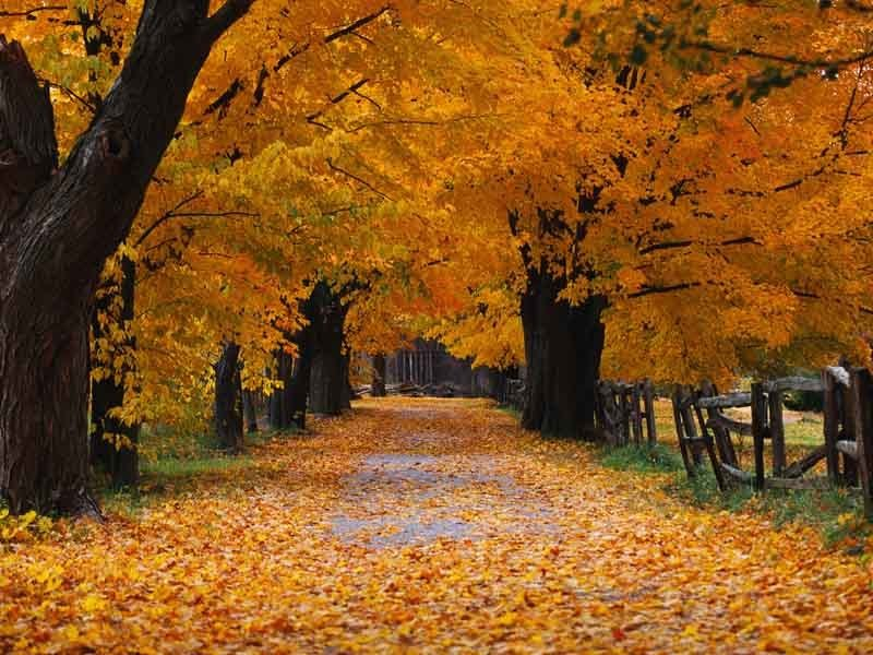 beautiful autumn season wallpaper hd beautiful autumn season wallpaper 800x600