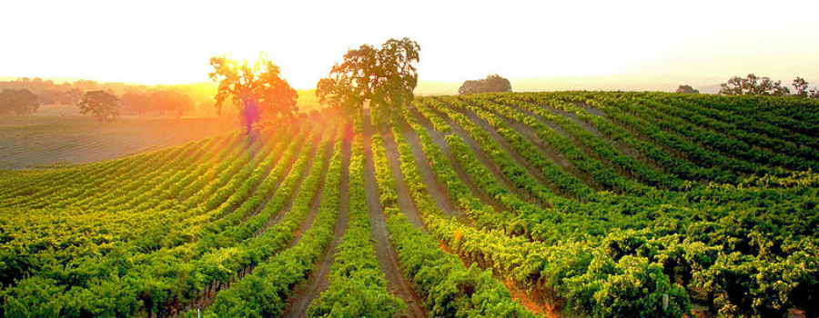 Winery amp Vineyard  HdV Wines