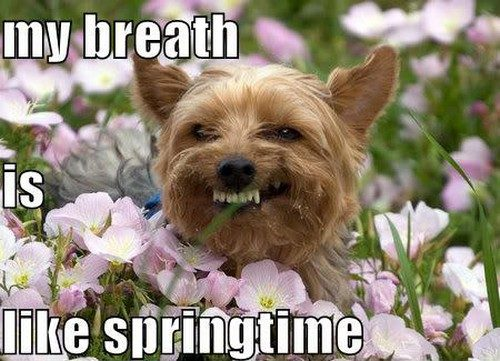 funny dog funny dogs derp funny pictures DERP DOG My breath is 500x361