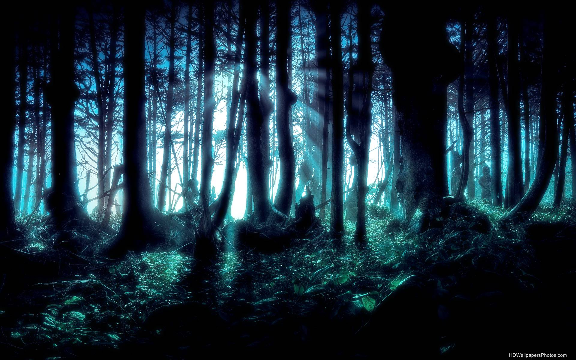 HD Dark Forest Wallpaper - WallpaperSafari