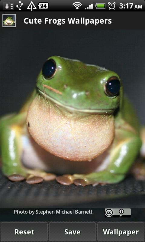 Cute Frog Wallpapers 1 0 HD Wallpapers Backgrounds cute frog 1 480x800