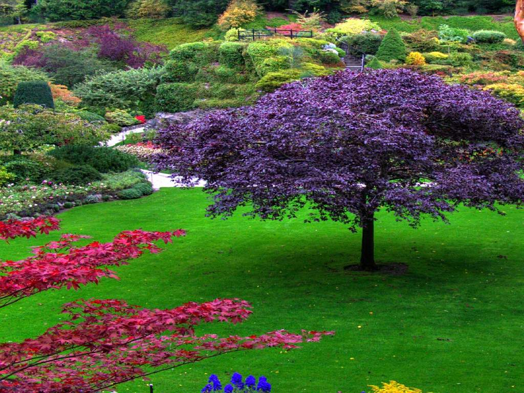 Beautiful Garden Pictures Home Design Ideas - beautiful gardens images
