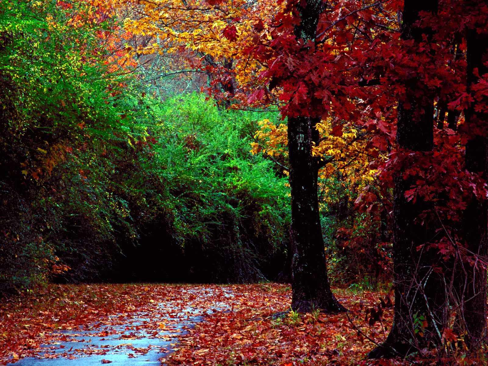 autumn scene autumn scene autumn scene 1600x1200