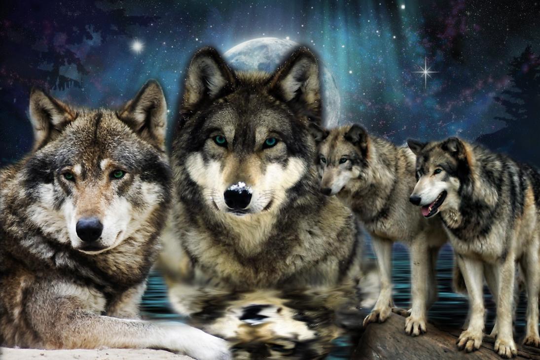 Nevada Wolf Pack Wallpaper
