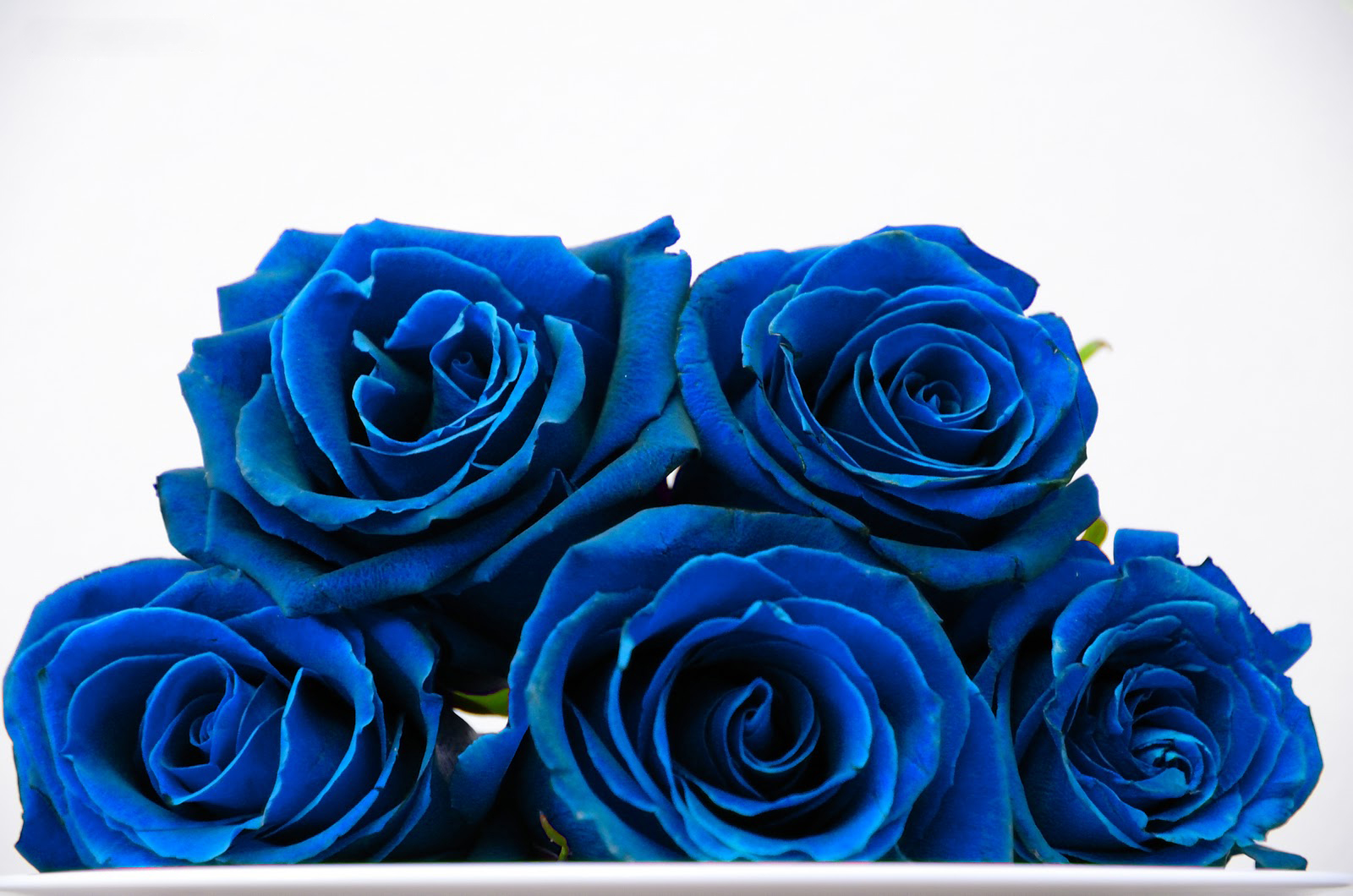 Blue Rose Wallpapers HDQ Beautiful Images