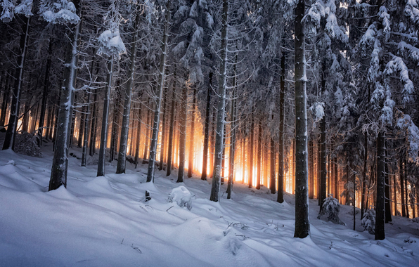 Wallpaper black forest germany winter woods wallpapers nature 596x380