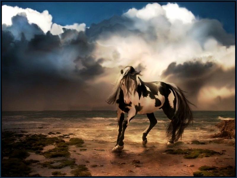 Cool Horse Computer Wallpaper - WallpaperSafari