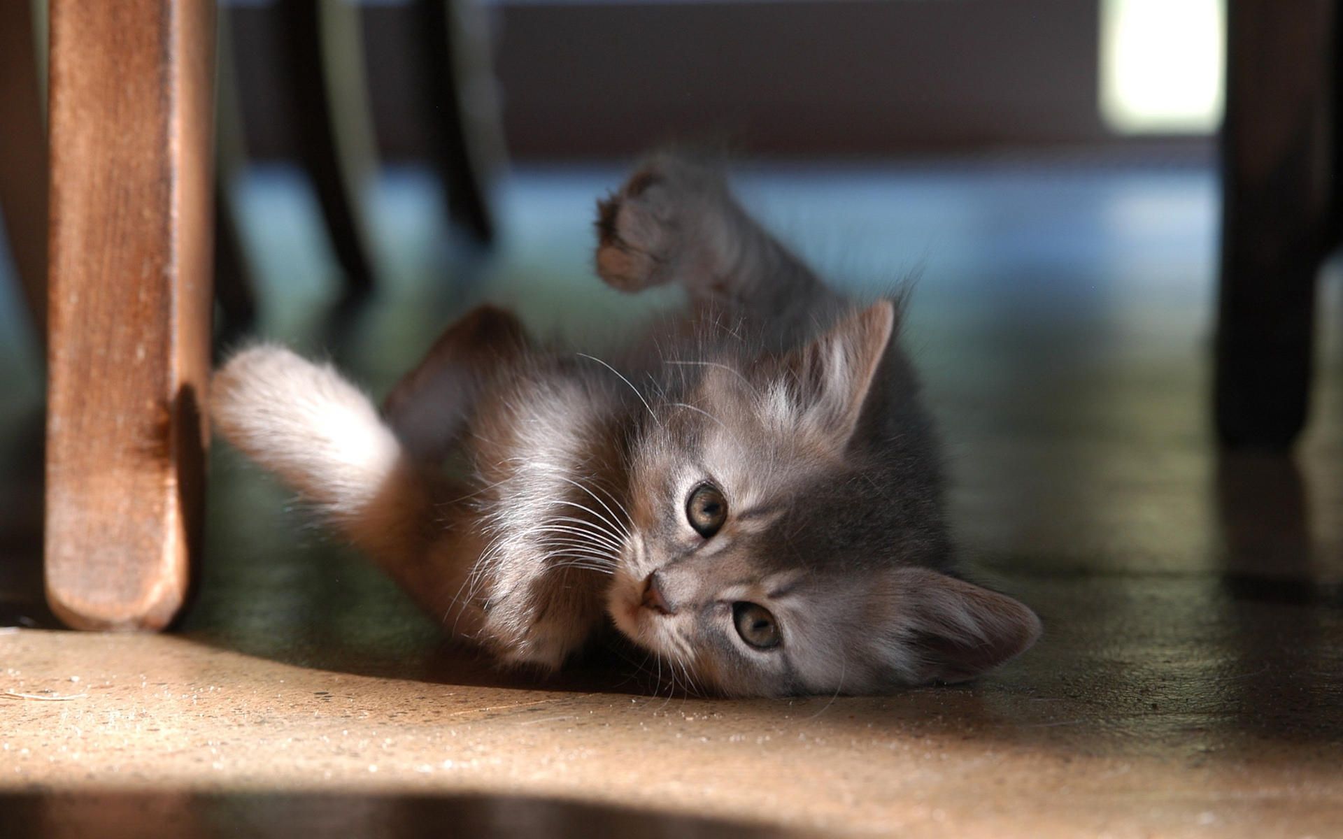 Baby Animal Wallpapers 34418 1920x1200 px HDWallSourcecom 1920x1200
