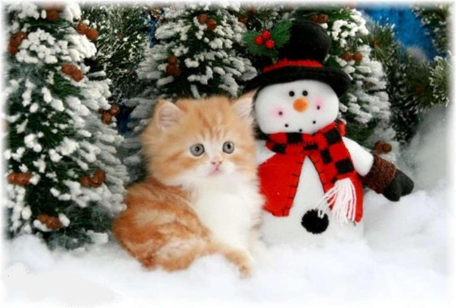 christmas kitten wallpaper   ForWallpapercom 897x605