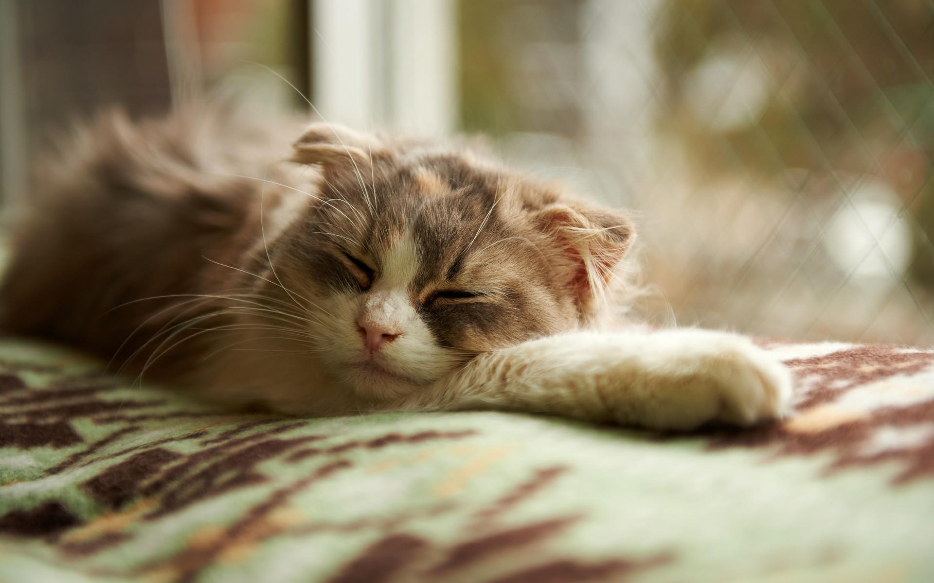 Sleeping Cat Wallpapers 40324 1920x1200px 1920x1200