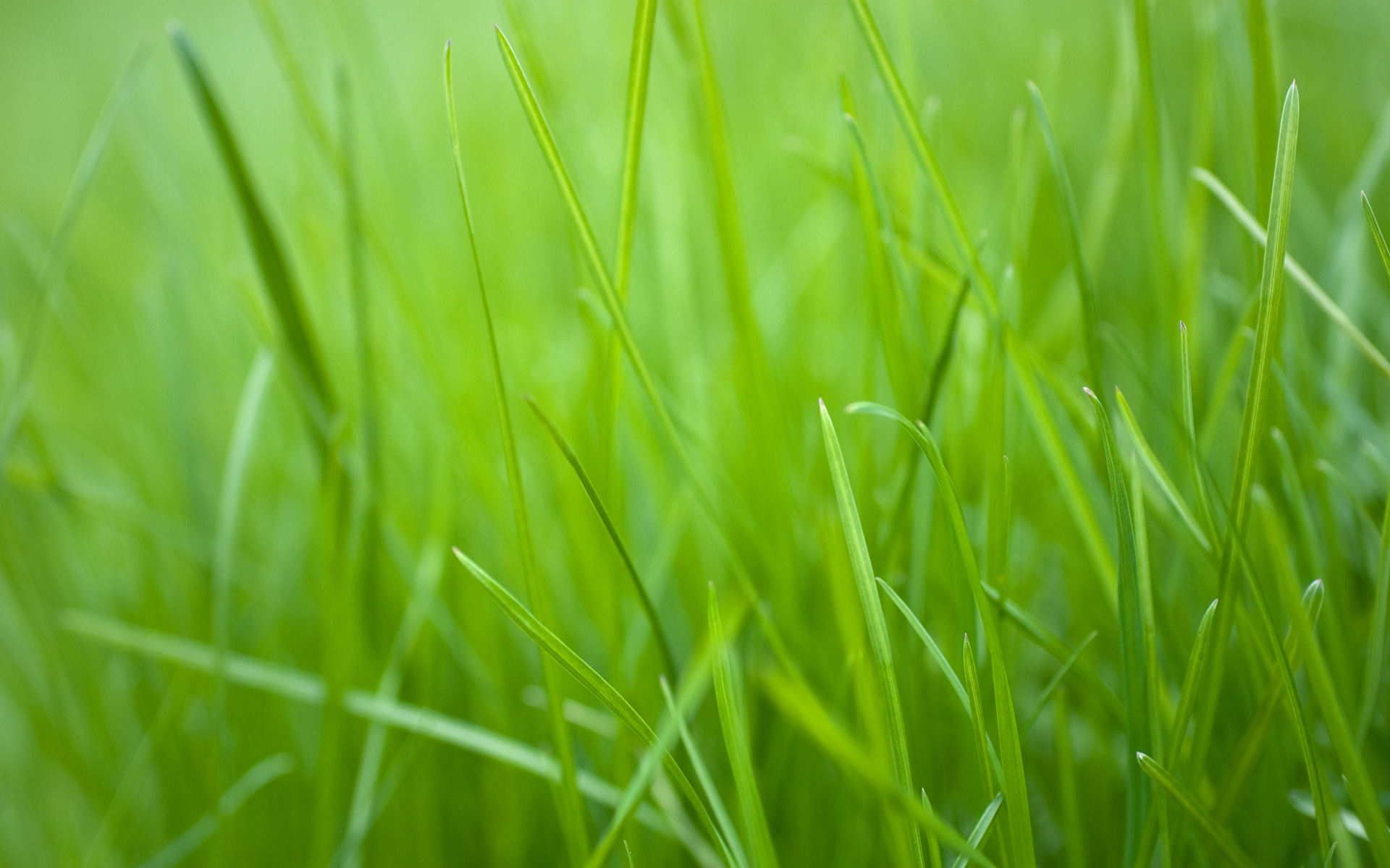 green grass wallpaper wallpapersafari