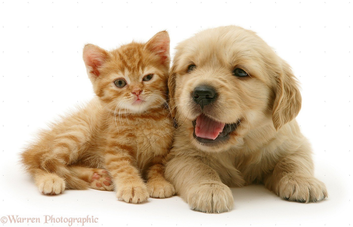 Cute Puppy and Kitten Wallpapers - WallpaperSafari