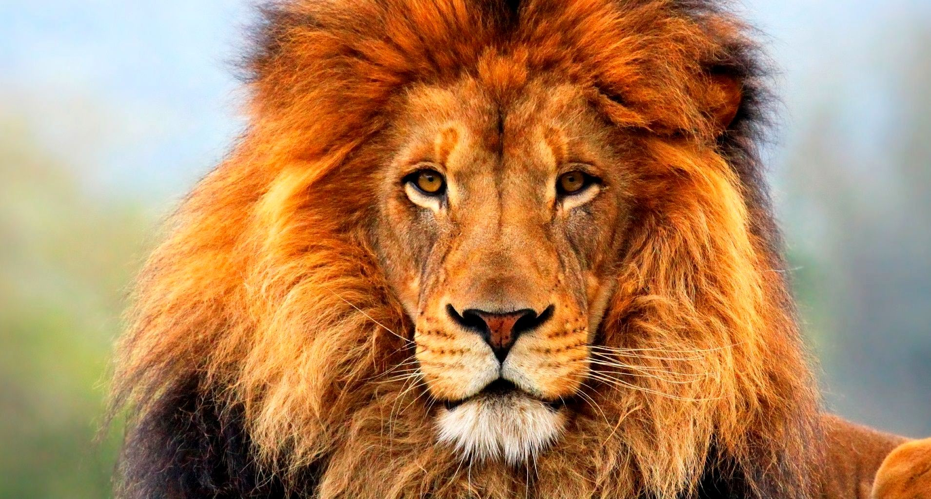 10 Most Popular Wild Animals Wallpapers Free Download Full: HD Animals Wallpaper