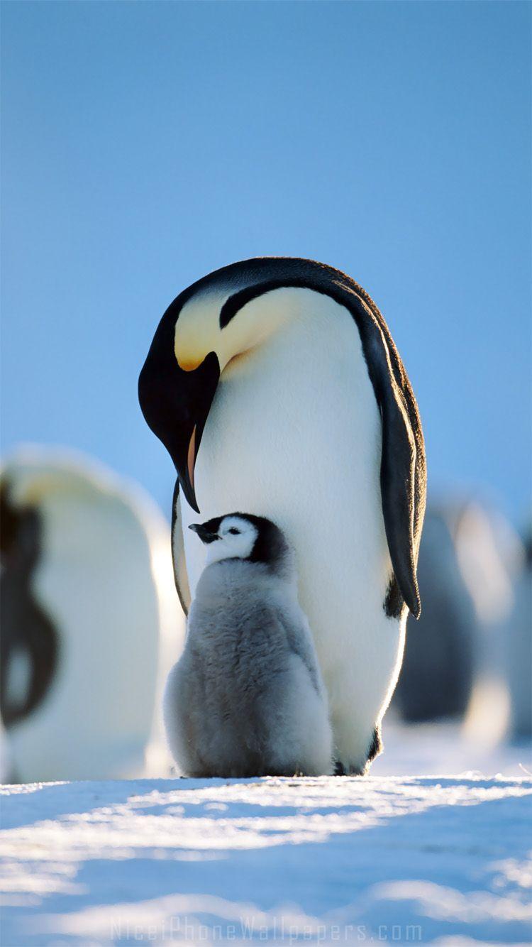 Cute Penguin iPhone Wallpapers   Top Cute Penguin iPhone 750x1334