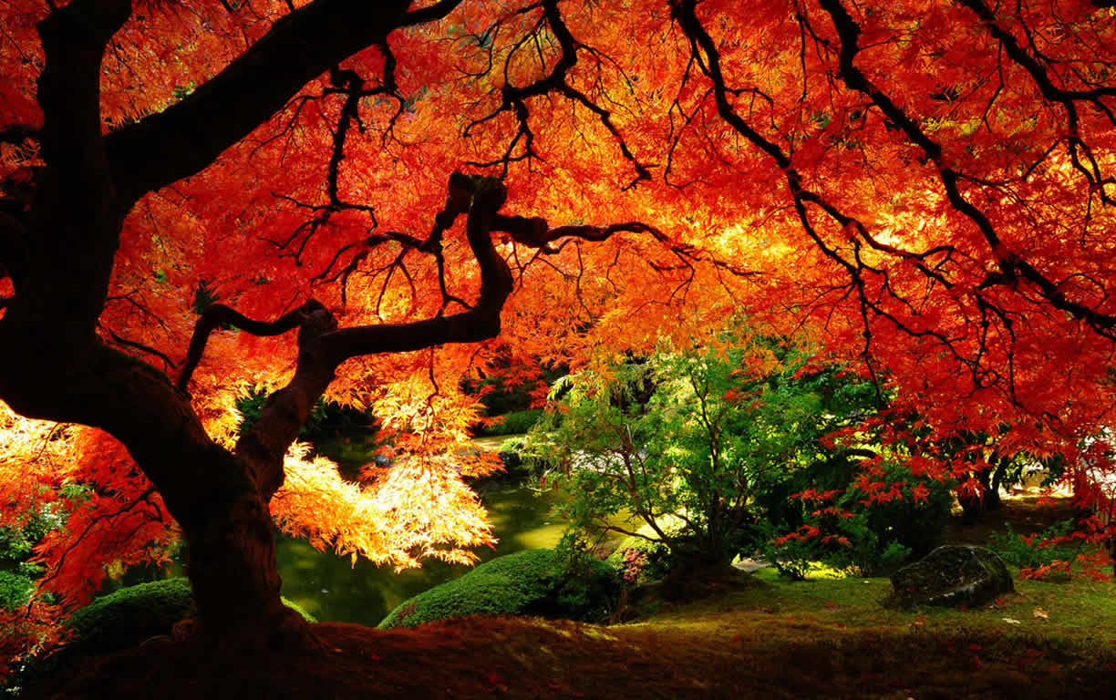 Autumn colors country desktop wallpaper backgrounds to brighten up 1224x768