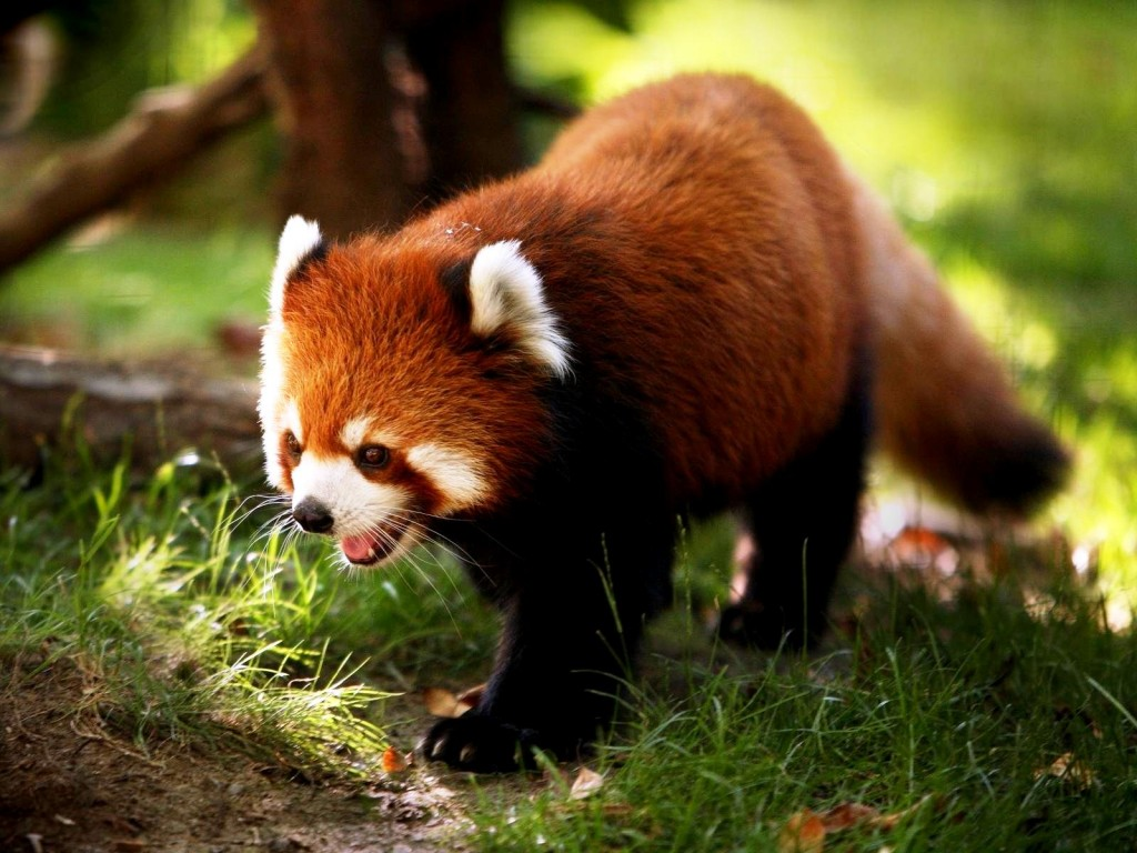 Free Download Hd Wallpaper Cute Animal Wallpapers For