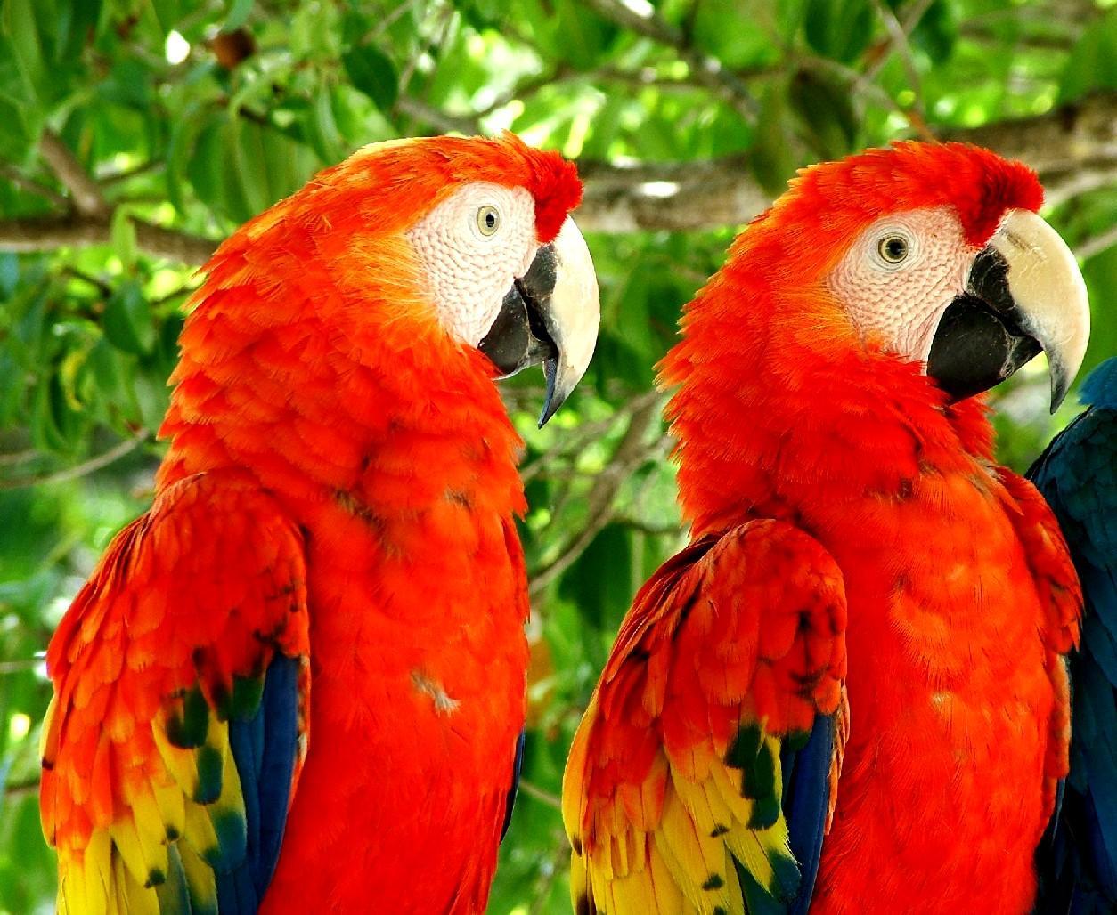 tropical birds wallpaper tropical birds 1254x1028