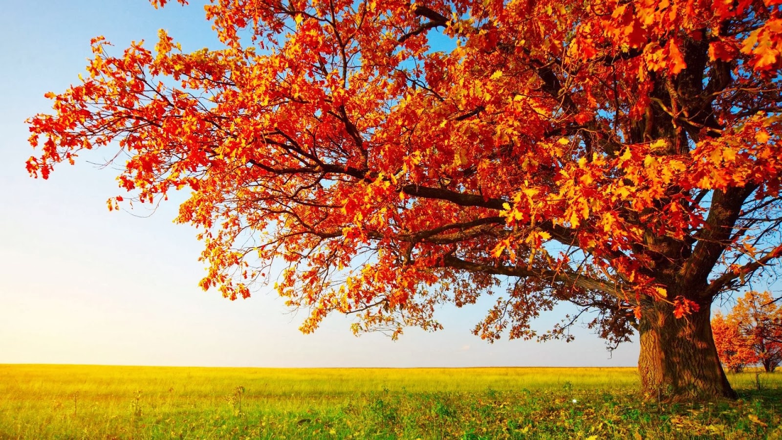 HD Wallpapers 1080p Nature autumn Mobile wallpapers 1600x900