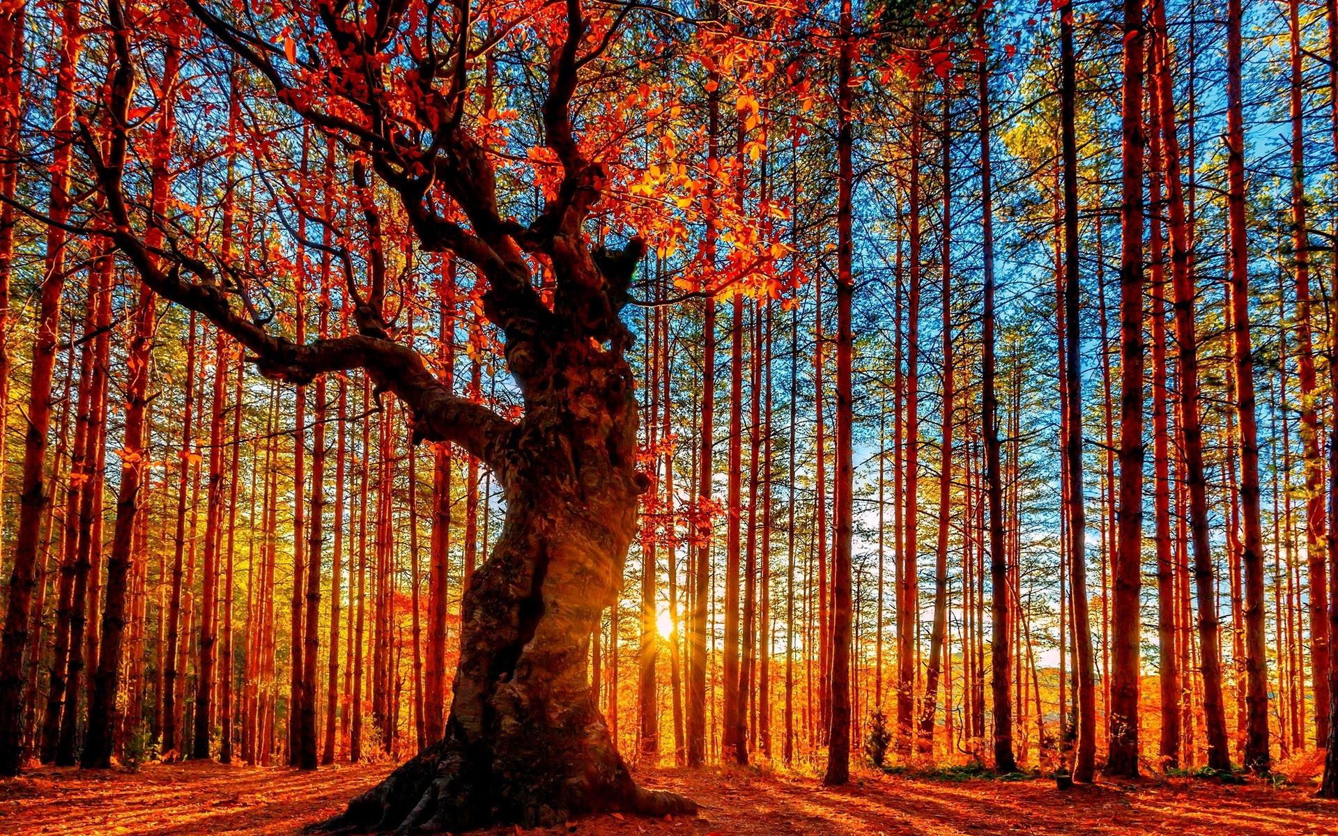 Aspen Tree Wallpaper 54 images 1920x1200