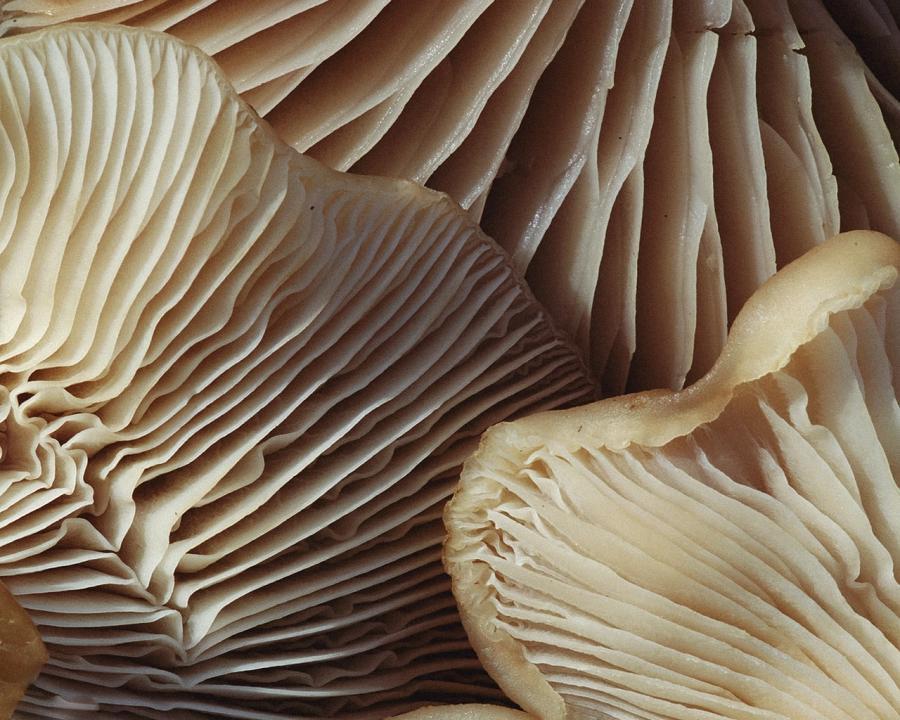 Mushroom spore photos 900x720