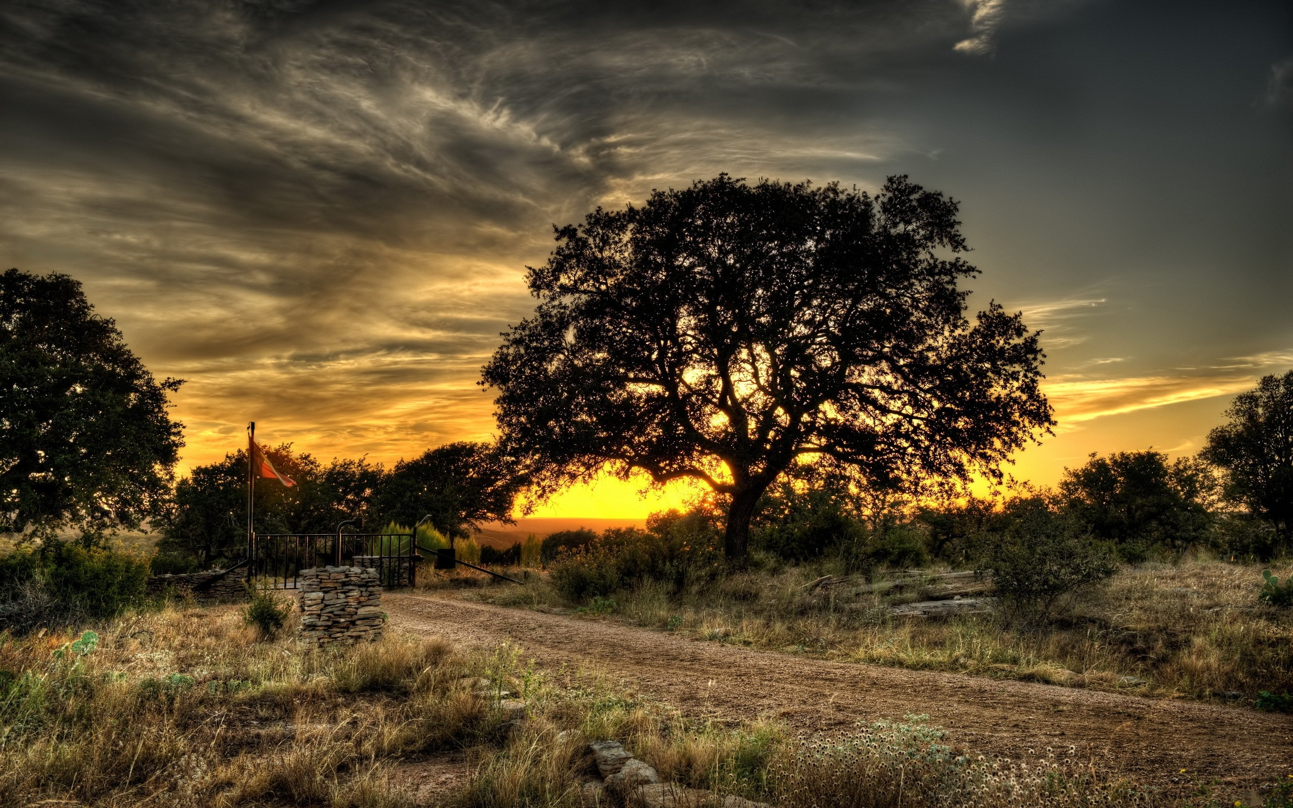 Landscapes Nature Trees Hdr Photography 30346 HD Wallpaper Res 2560x1600