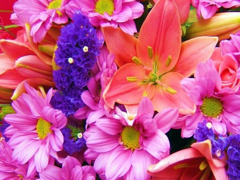 spring flowers screensavers - photo #14