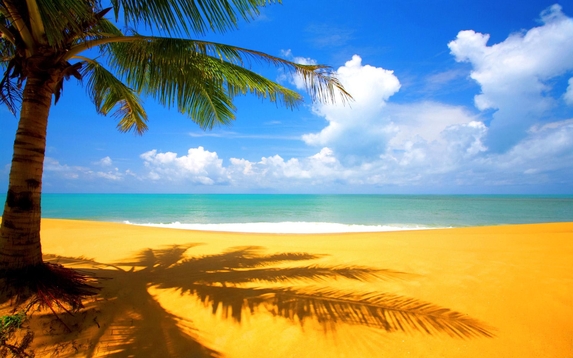 wallpaper of beach scenery a beautiful shadow of palm near beachjpg 1920x1200