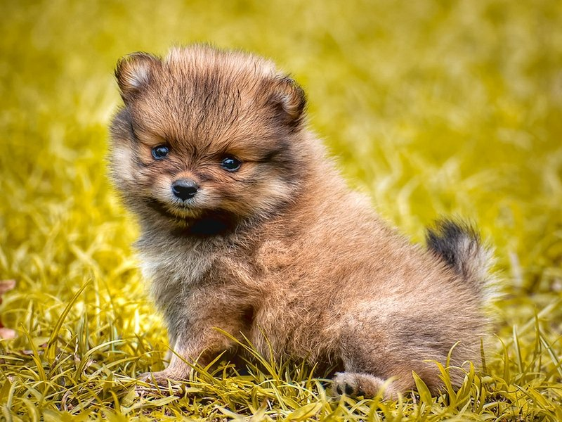 30 Fluffy and Cute Animal Pictures |Cute Fluffy Talking Animals