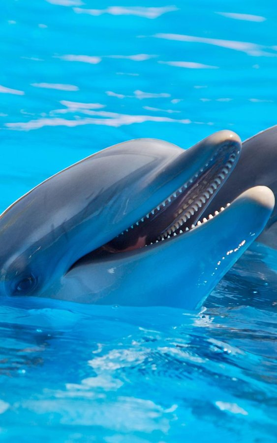 Dolphins Live Wallpaper   Android Apps and Tests   AndroidPIT 563x900