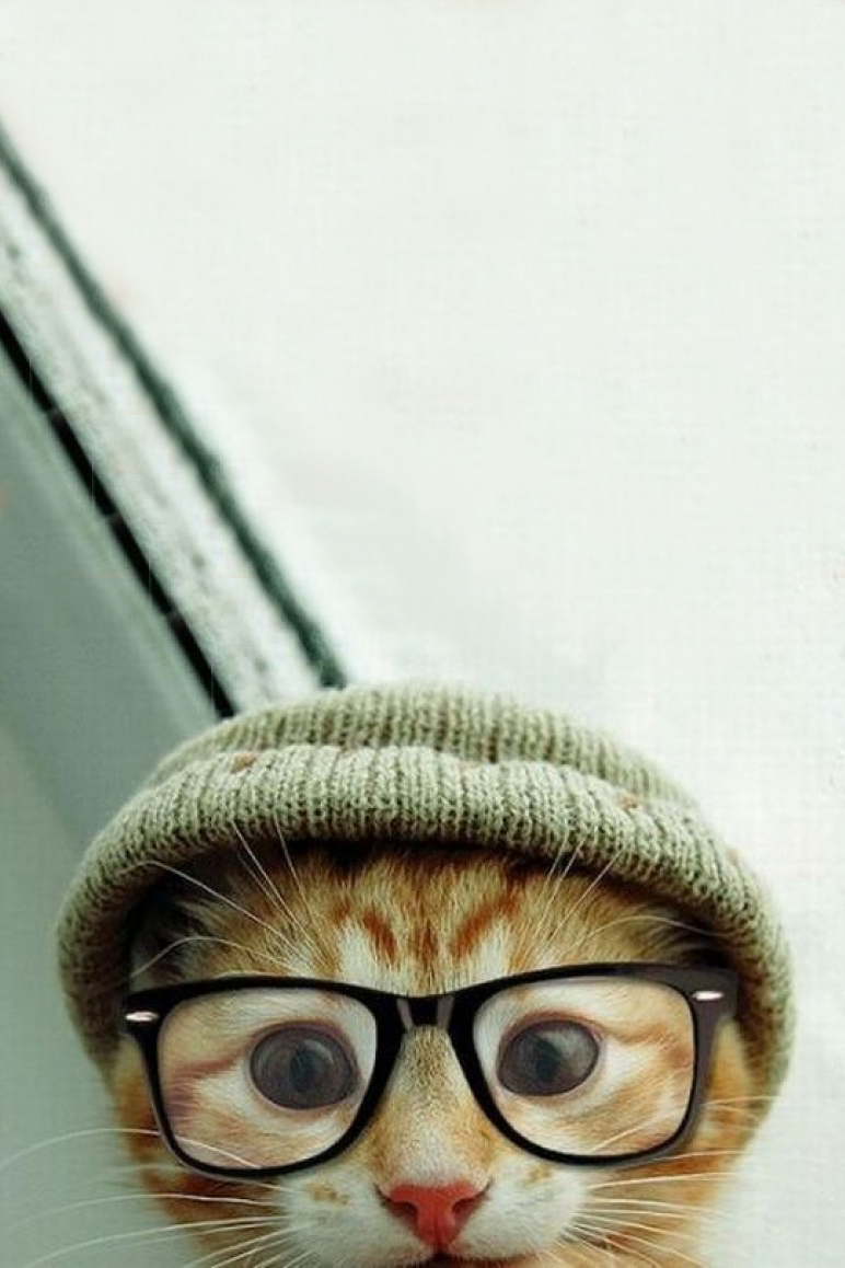 Cute Hipster Kitty Android Wallpaper 772x1158