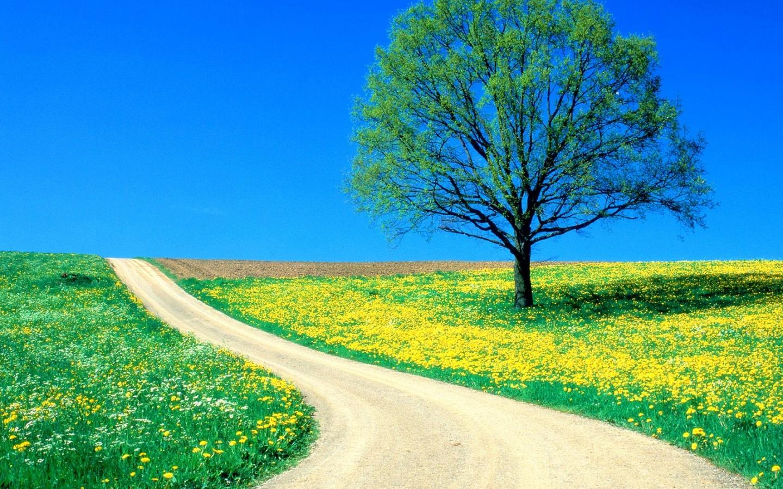 1440x900 Spring road 1440x900