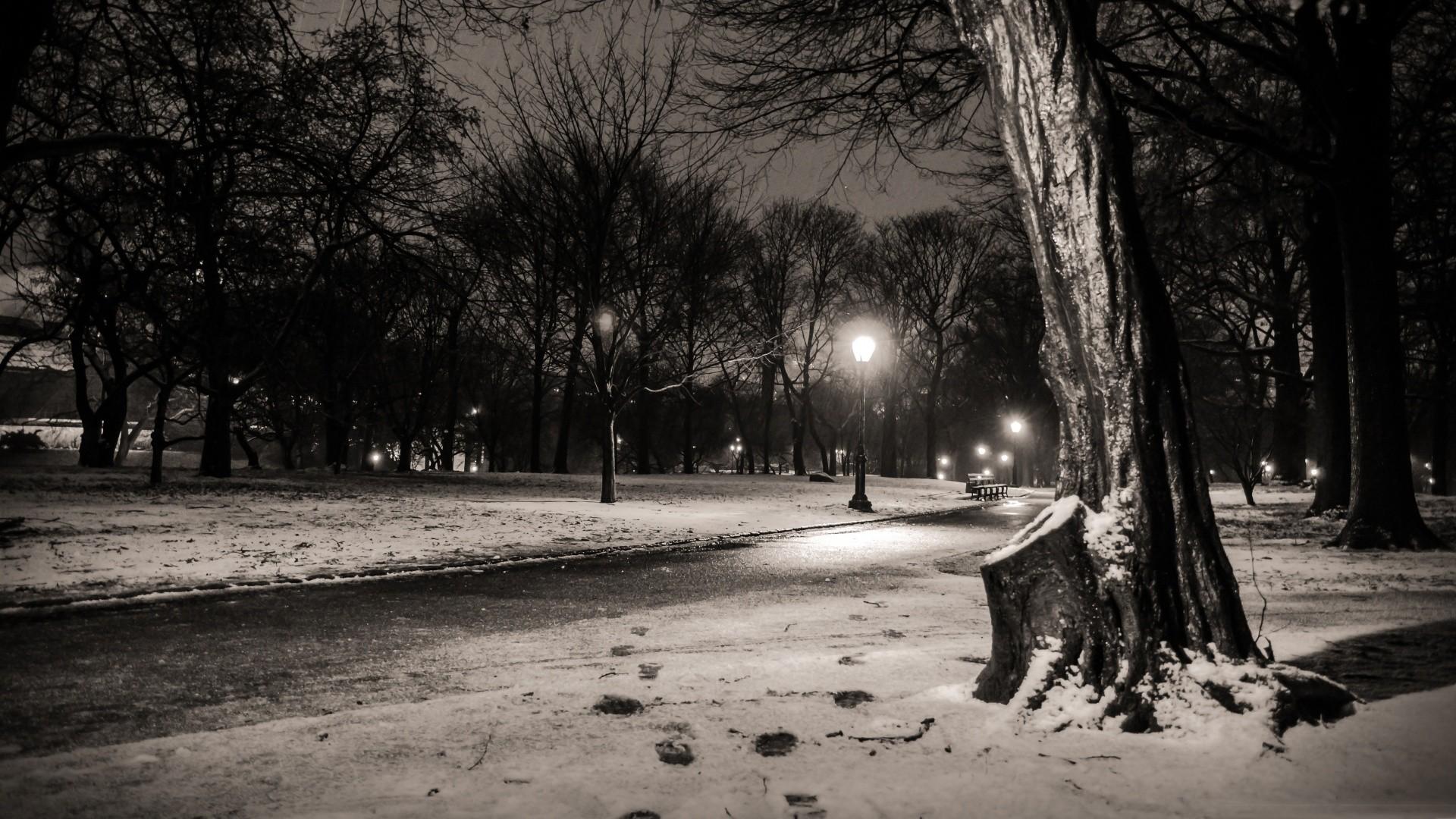 black and white nature snow trees dark night lights New 1920x1080
