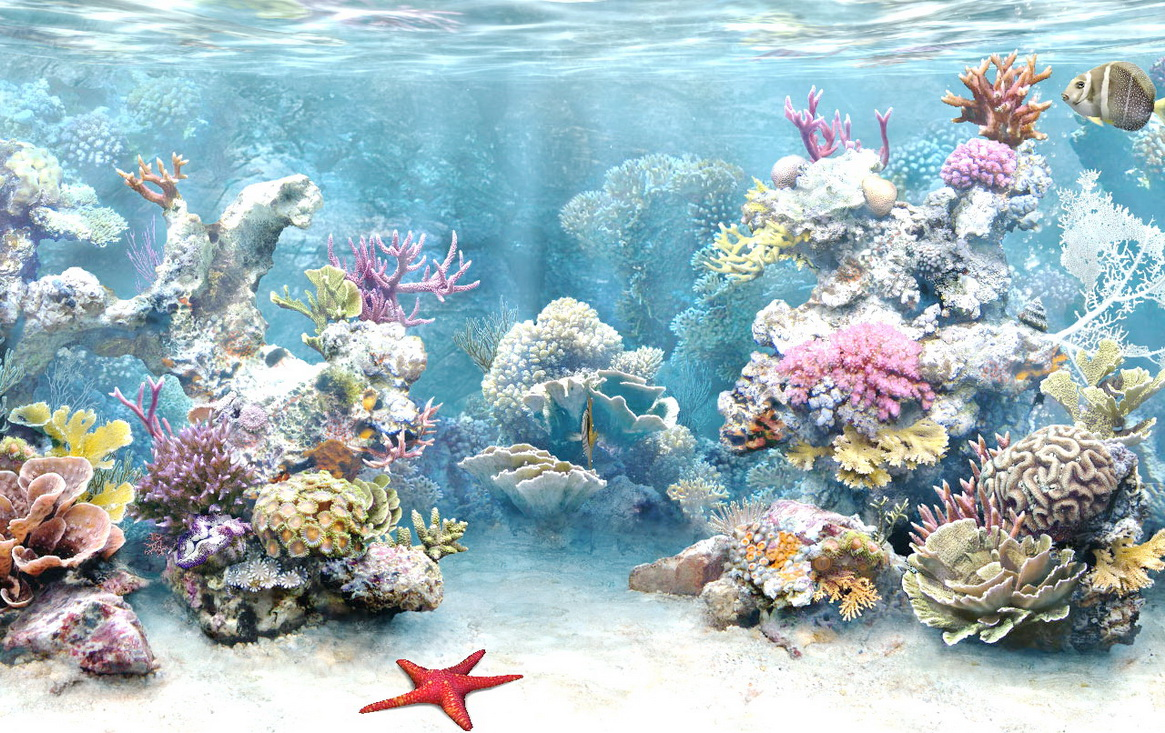 coral reef wallpaper 9 792000jpg 1165x733