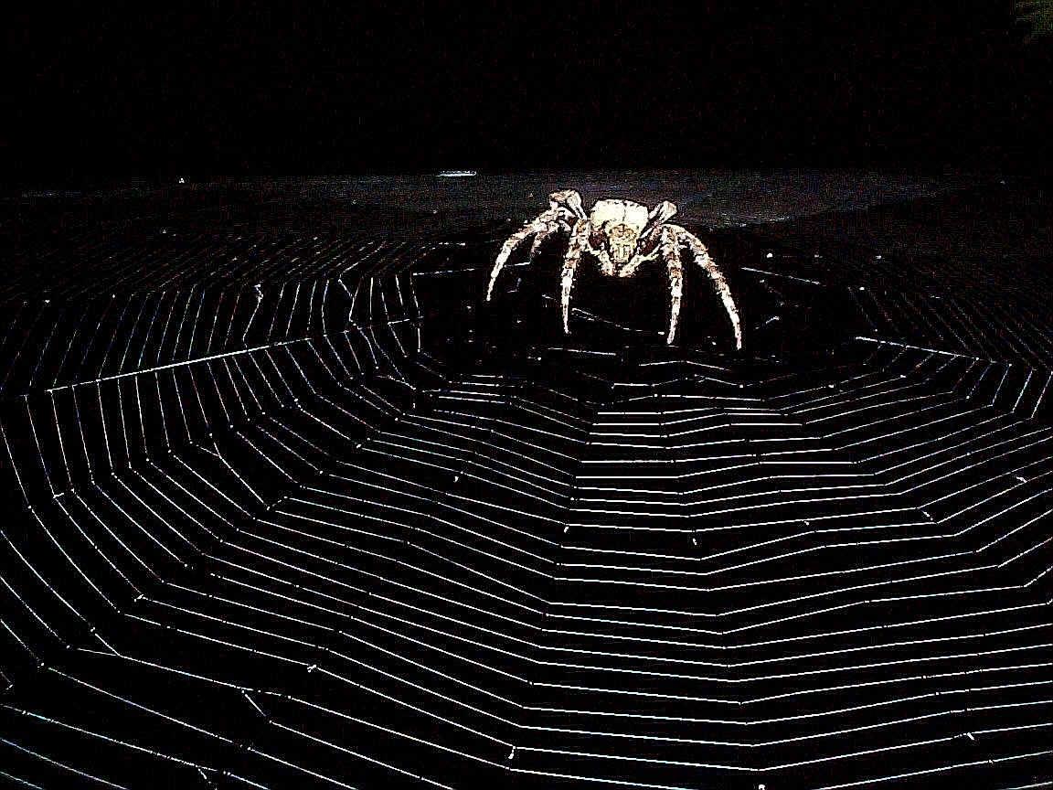 Spider Wallpaper 1152x864