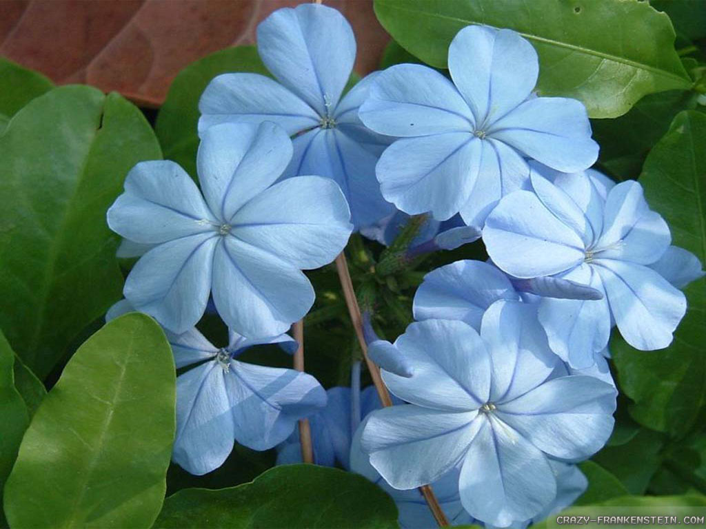 Light Blue Flower Wallpaper Images Pictures Becuo