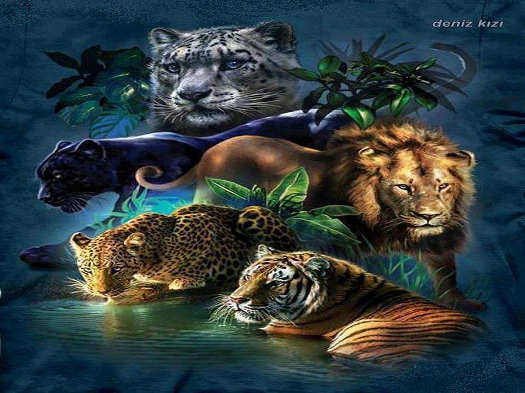Big Cats Wallpapers High Resolution - WallpaperSafari