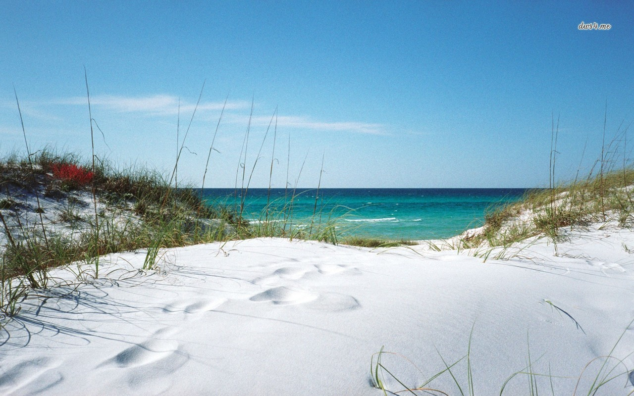 White sanded beach in Florida wallpaper   Beach wallpapers   20723 1280x800