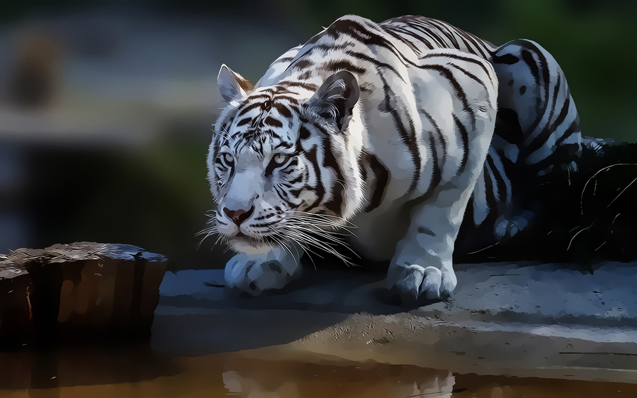 White Tiger Abstract Wallpapers HD Wallpaper Downloads 1280x800